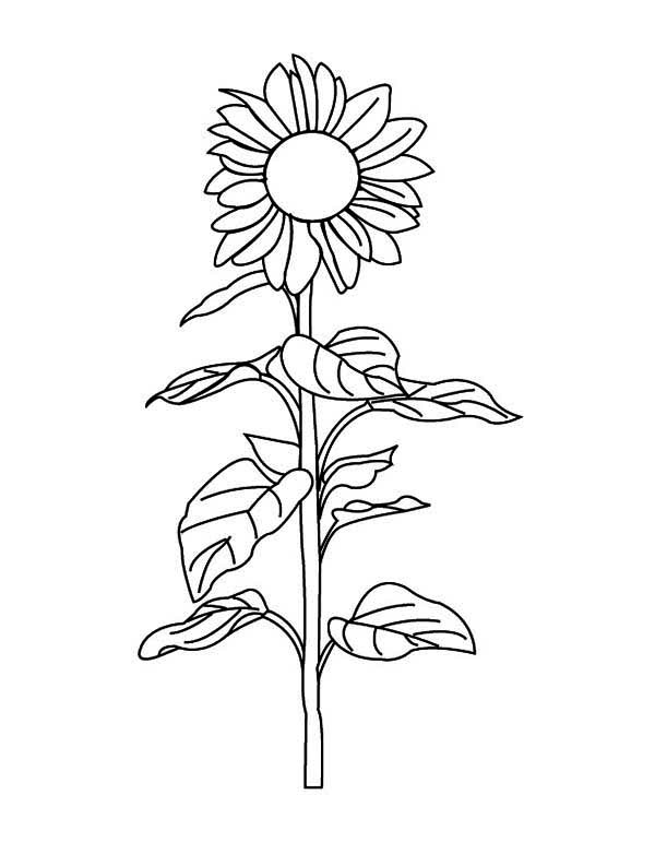 sunflower pictures to colour in top 10 sunflowers coloring pages pictures big collection sunflower pictures in colour to