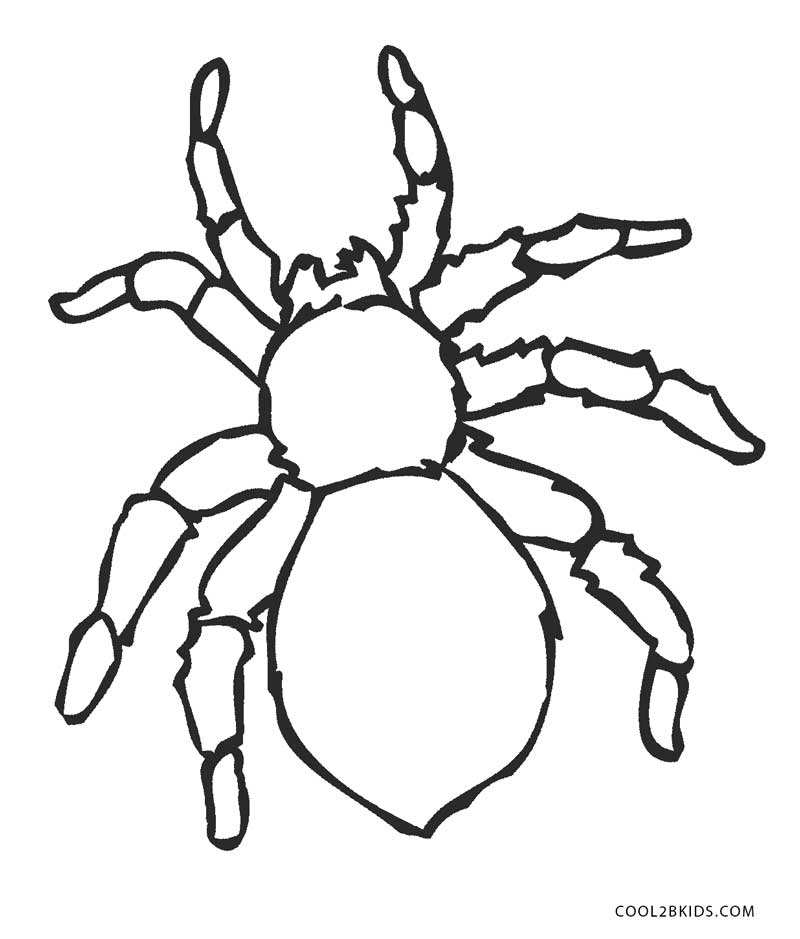 tarantula coloring pages free printable spider coloring pages for kids cool2bkids tarantula pages coloring