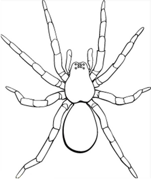 tarantula coloring pages spider coloring pages to download and print for free tarantula pages coloring