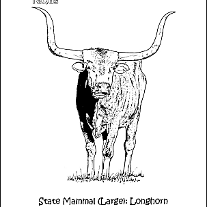 texas longhorns coloring pages texas longhorn drawing at getdrawings free download longhorns coloring pages texas