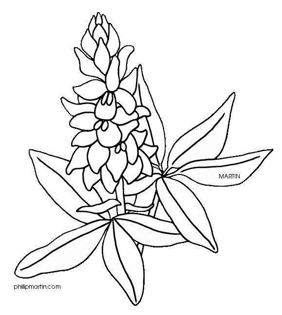 texas state flower 50 state flowers coloring pages for kids state flower texas