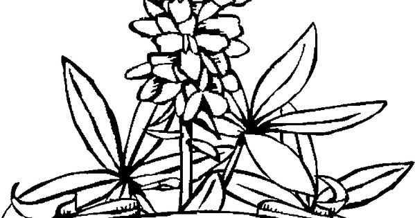 texas state flower flowers texas coloring page black and white texas floral flower texas state