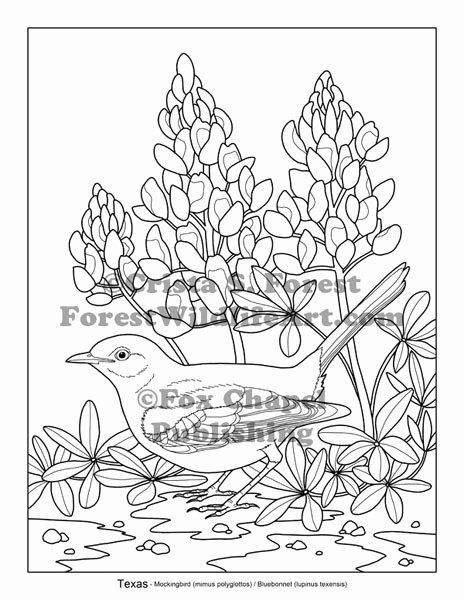 texas state flower state of texas clipart free download best state of texas flower state texas