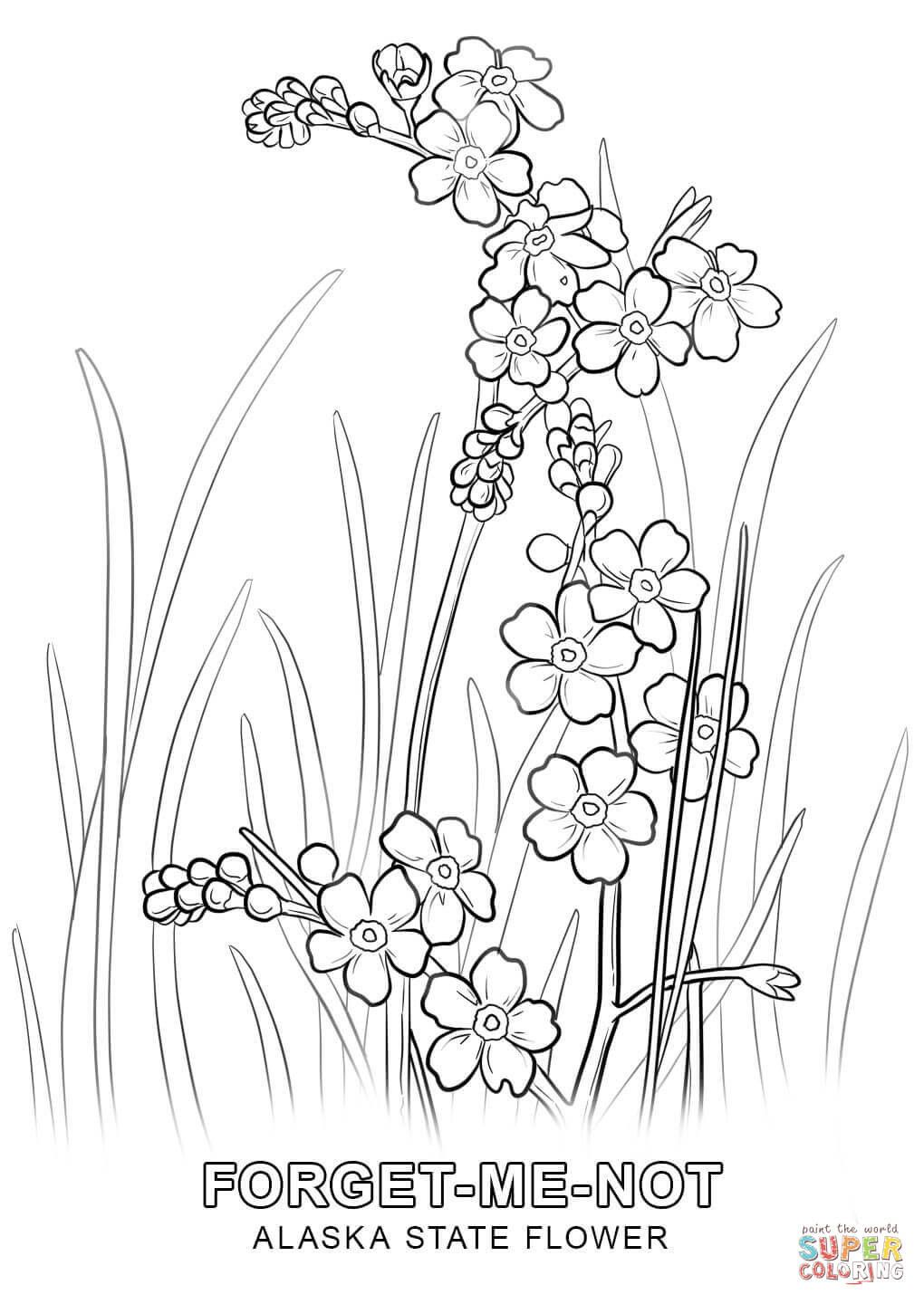 texas state flower texas state flower coloring page bluebonnet usa state texas flower