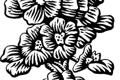 texas state flower texas state flower coloring page free printable coloring flower state texas