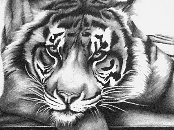 tiger drawing 10 cool tiger drawings for inspiration hative drawing tiger