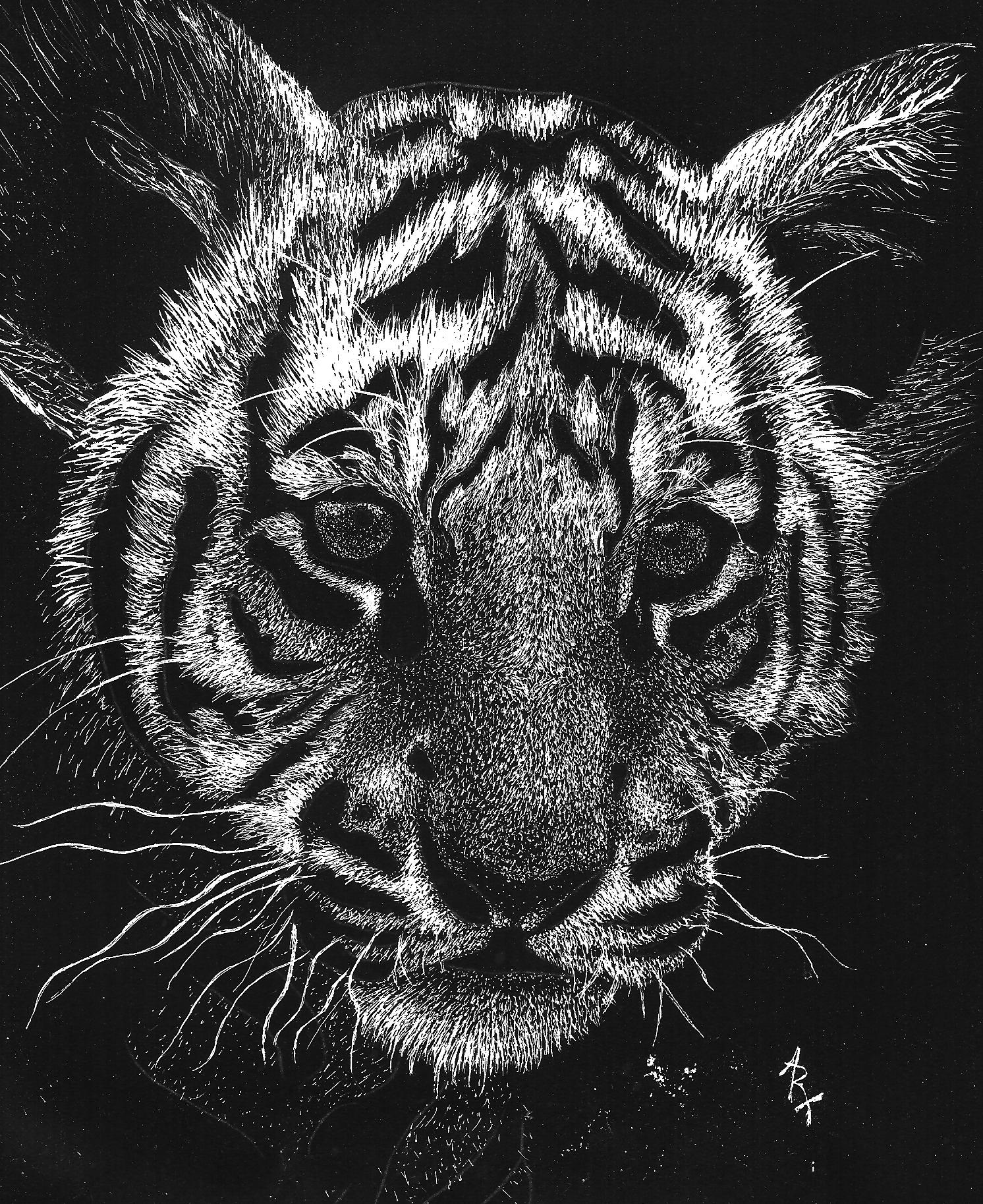 tiger drawing baby tiger by art417tracy on deviantart drawing tiger