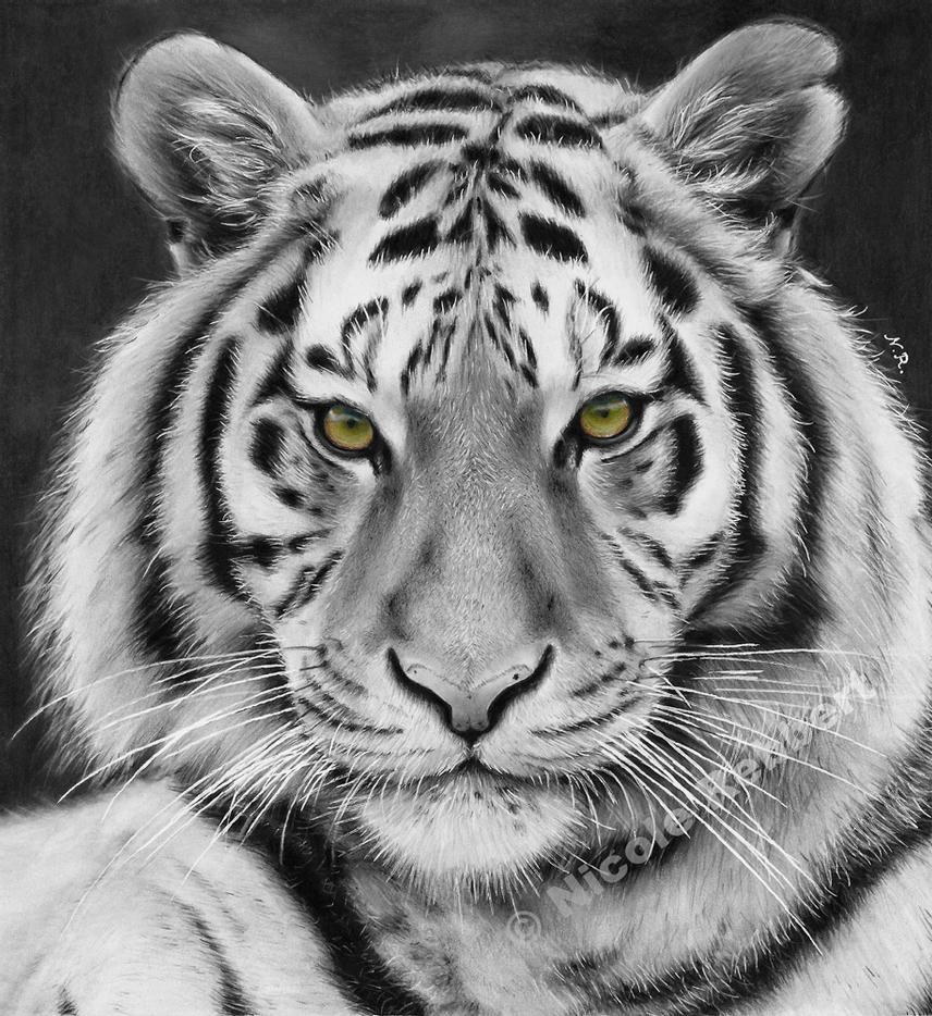 tiger drawing black and white tiger drawing by quelchii on deviantart tiger drawing