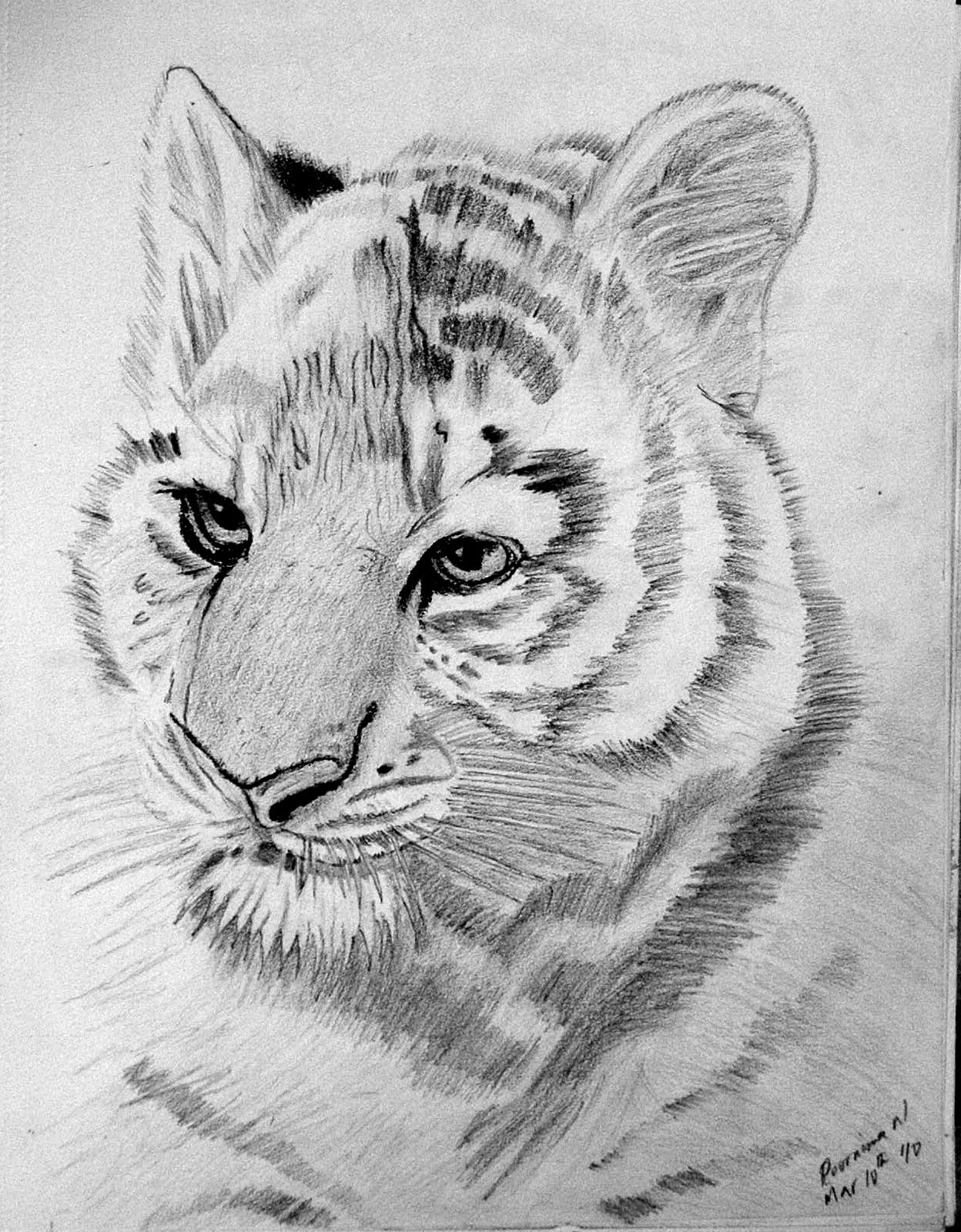 tiger drawing experiments with brushes and strokes pencil sketching drawing tiger