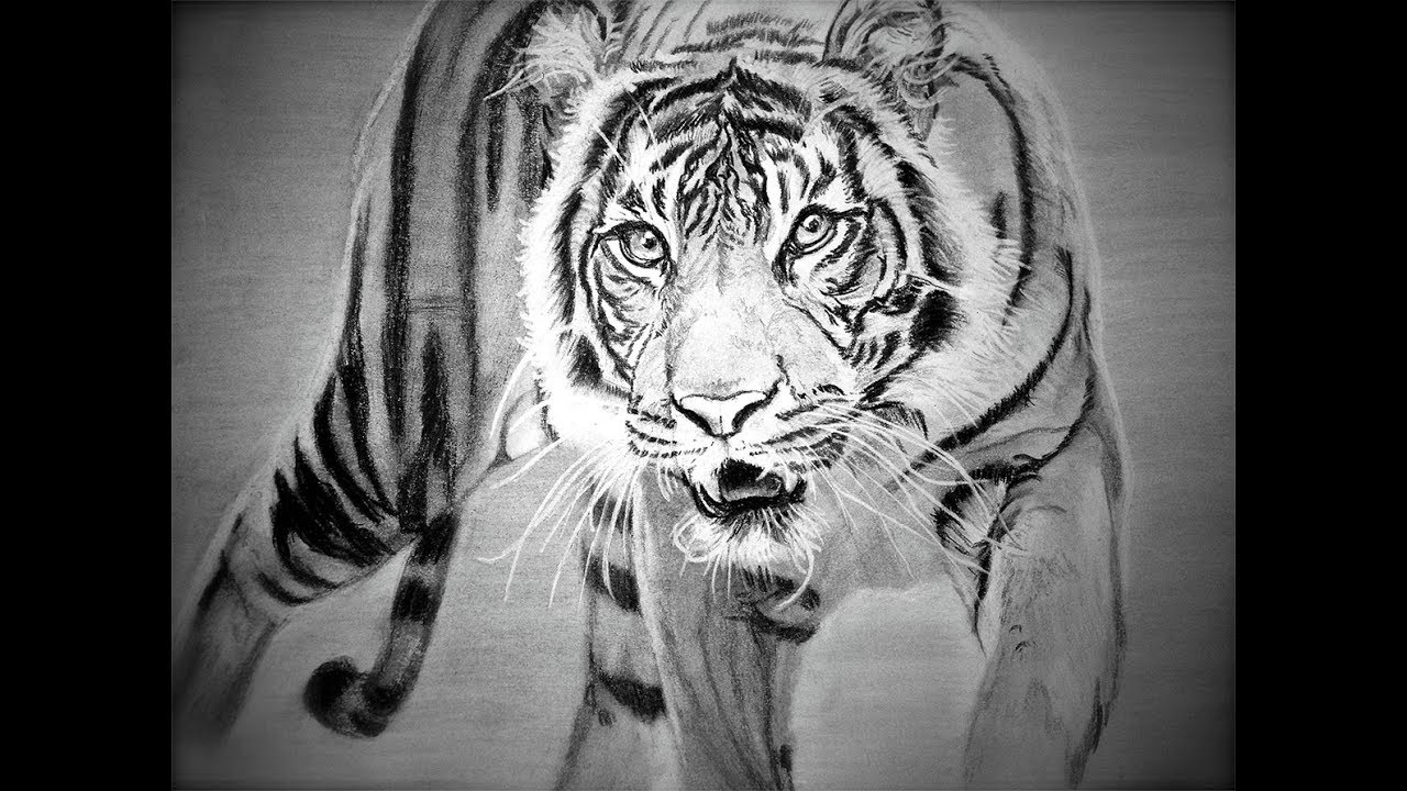 tiger drawing how to draw siberian tiger full body drawing step by step drawing tiger