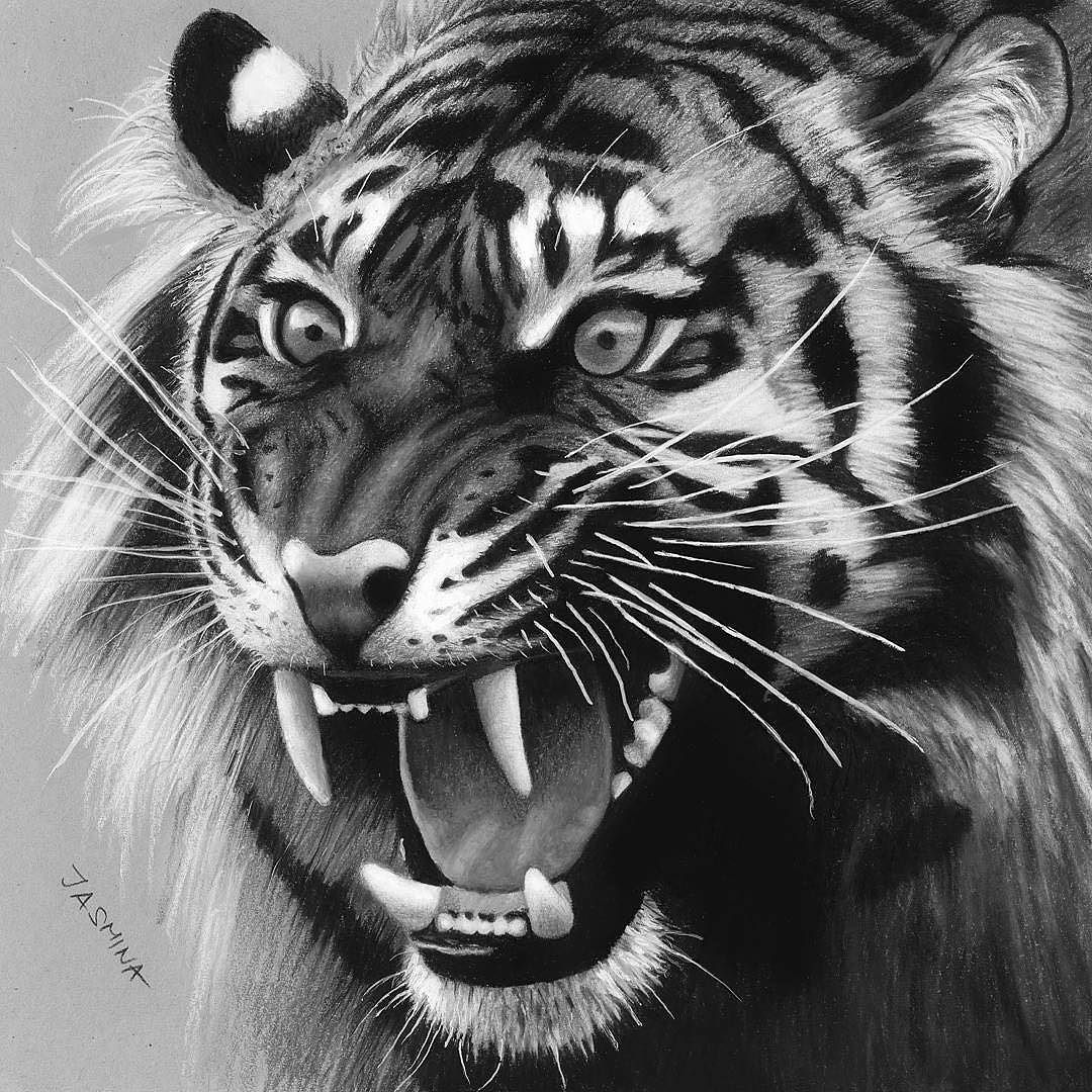 tiger drawing roaring paintings search result at paintingvalleycom tiger drawing