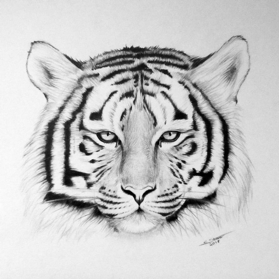 tiger drawing tiger drawing by lethalchris on deviantart drawing tiger