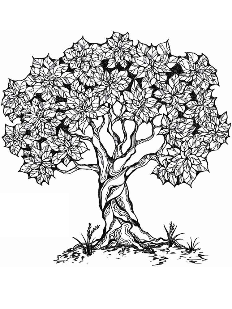 tree coloring pages tree coloring pages for adults free printable tree coloring tree pages