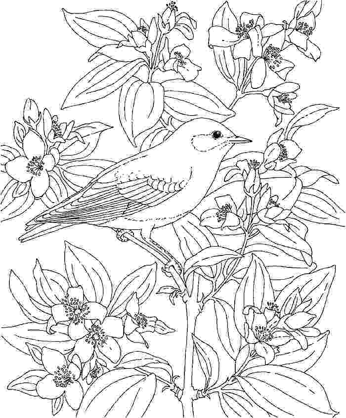 tropical coloring pages tropical island coloring pages at getcoloringscom free tropical coloring pages