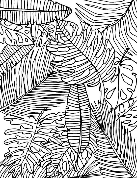 tropical coloring pages tropical plant coloring pages for adults vogue coloring book tropical coloring pages