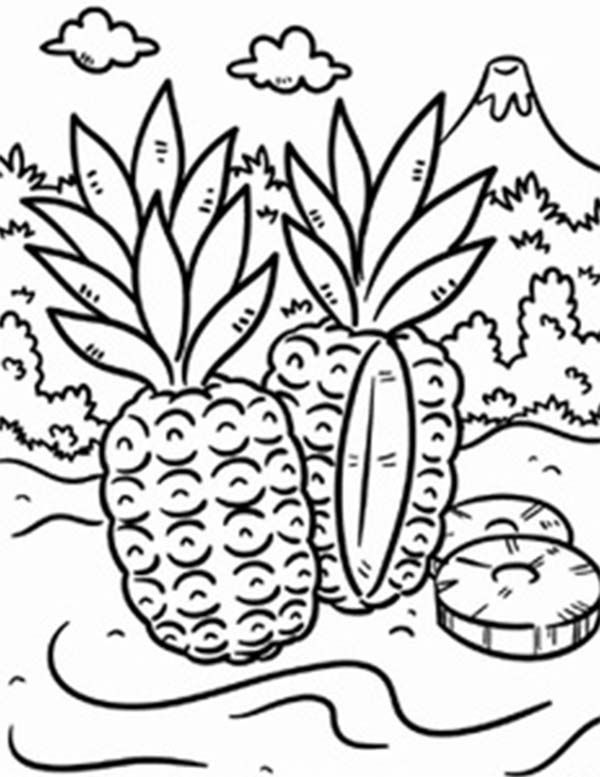 tropical pictures to color printable summer coloring pages tropical pictures color to