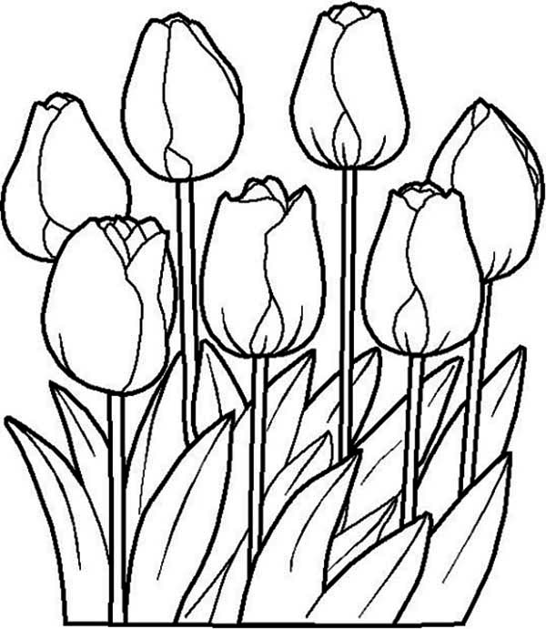 tulip flower coloring pages tulip coloring pages download and print tulip coloring pages coloring flower tulip pages