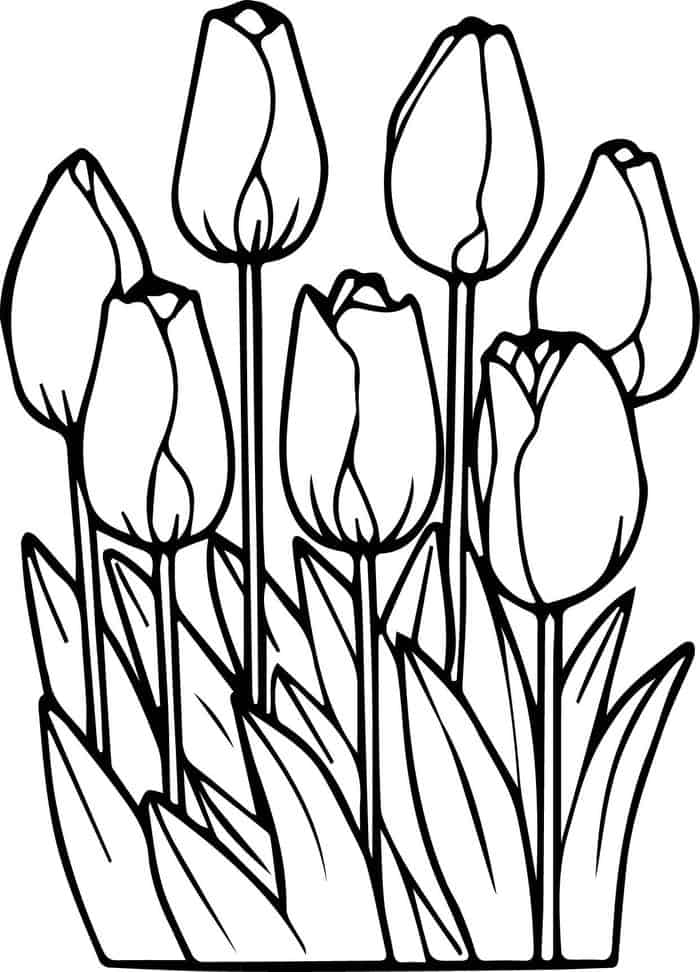 tulip flower coloring pages tulip coloring pages download and print tulip coloring pages flower coloring pages tulip