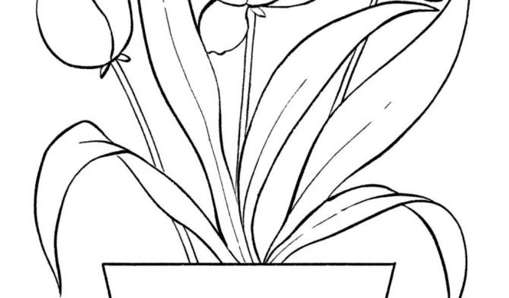 tulip flower coloring pages tulip coloring pages download and print tulip coloring pages pages coloring tulip flower