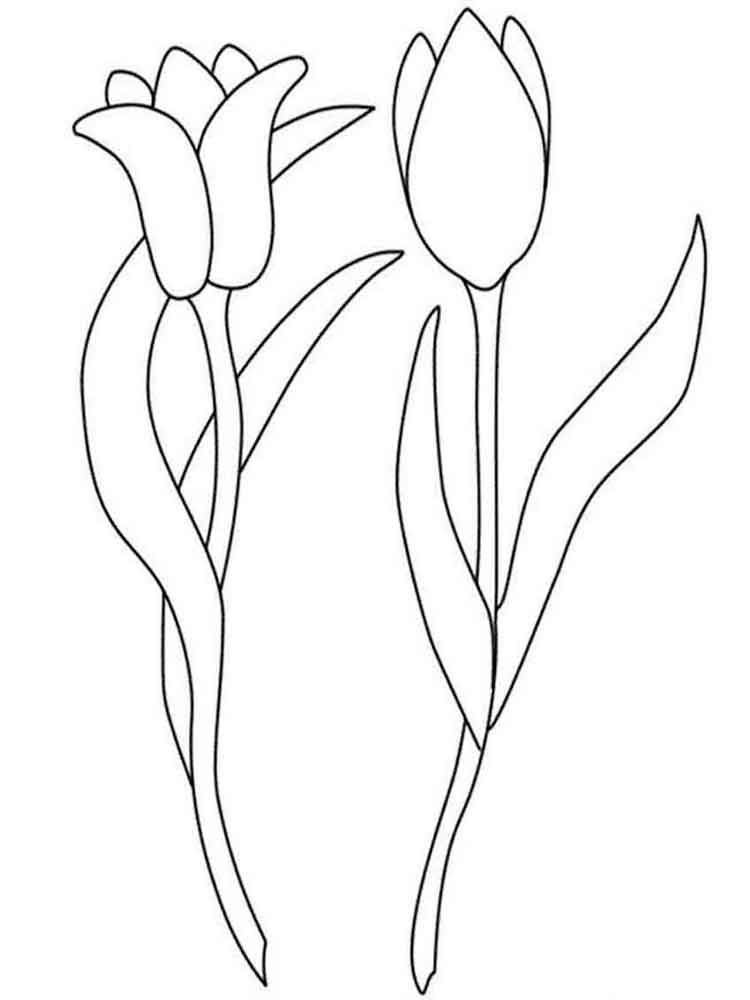 tulip flower coloring pages tulip coloring pages download and print tulip coloring pages pages tulip flower coloring