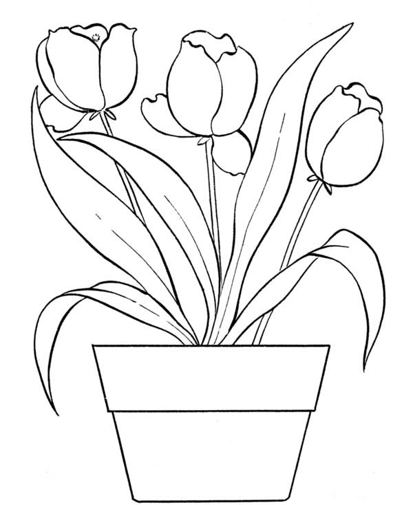 tulip flower coloring pages tulip coloring pages download and print tulip coloring pages tulip coloring flower pages