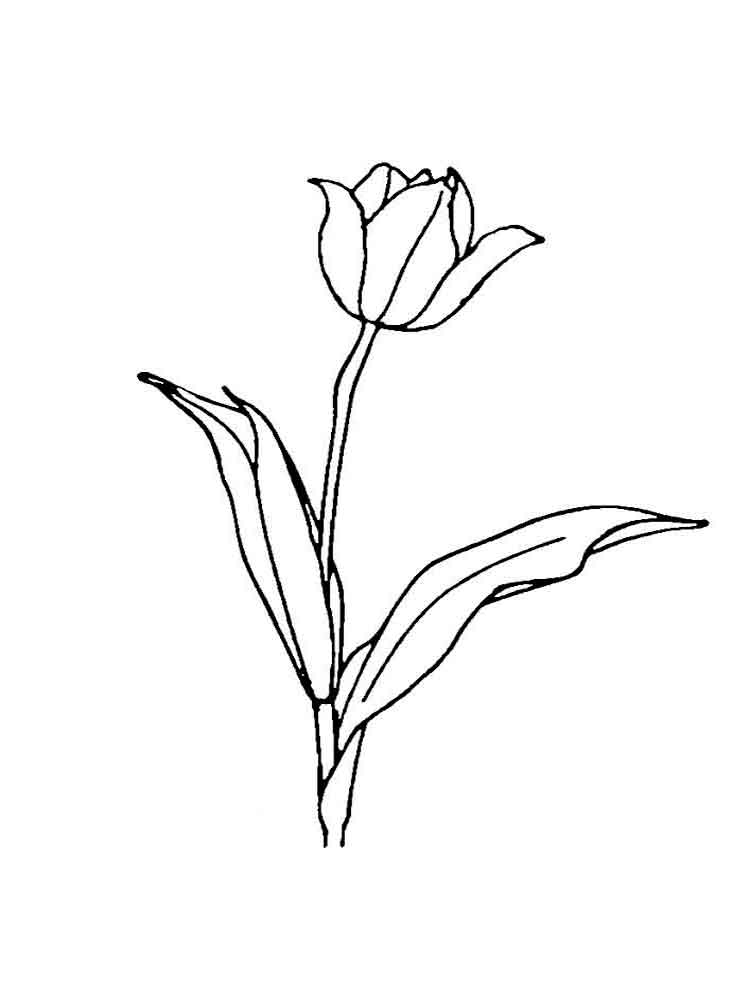 tulip flower coloring pages tulip coloring pages download and print tulip coloring pages tulip coloring pages flower