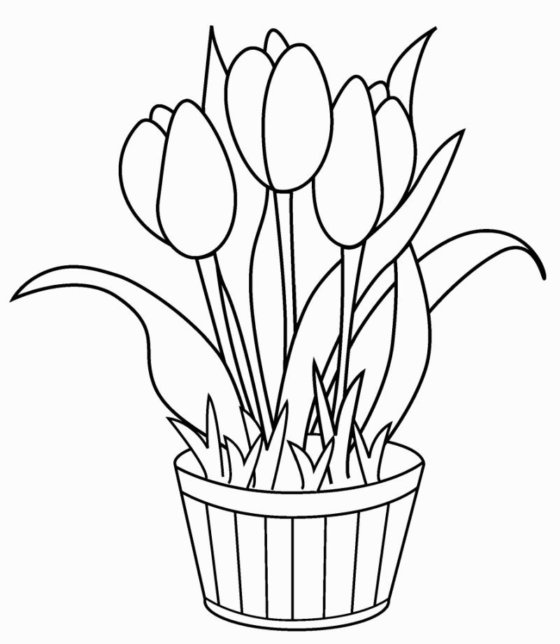 tulip flower coloring pages tulip coloring pages flower coloring pages tulip