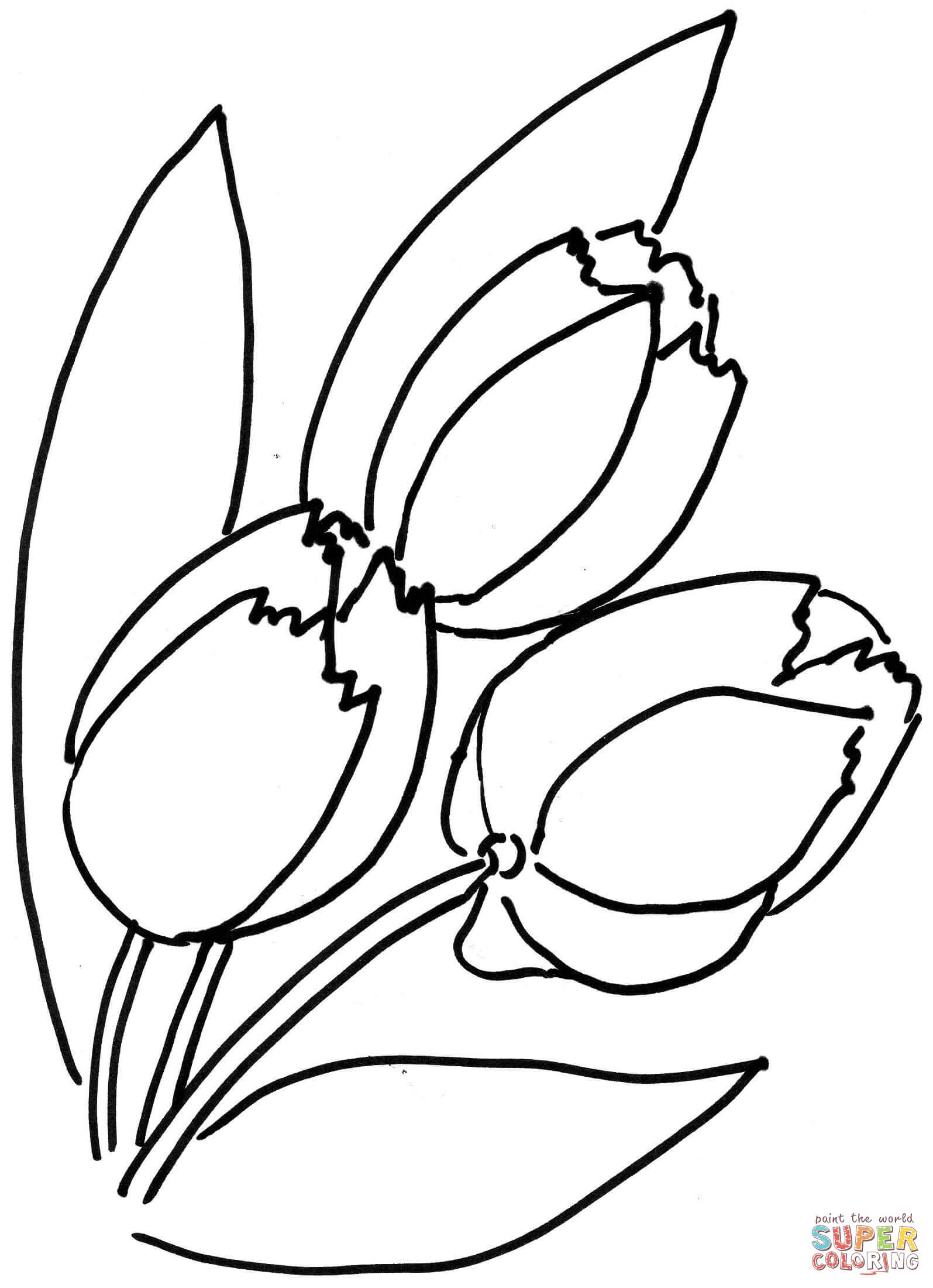 tulip flower coloring pages tulip coloring pages tulip flower pages coloring