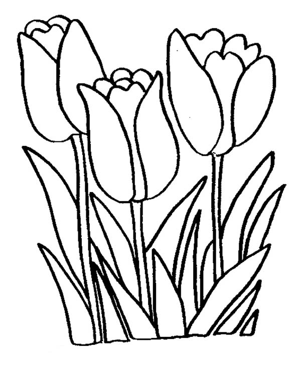 tulip flower coloring pages tulip flower coloring pages getcoloringpagescom coloring flower tulip pages