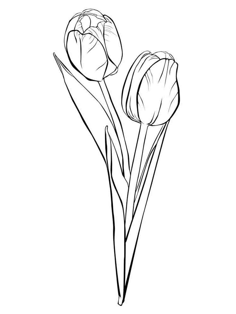 tulip flower coloring pages tulip flowers coloring book page stock illustration pages tulip coloring flower
