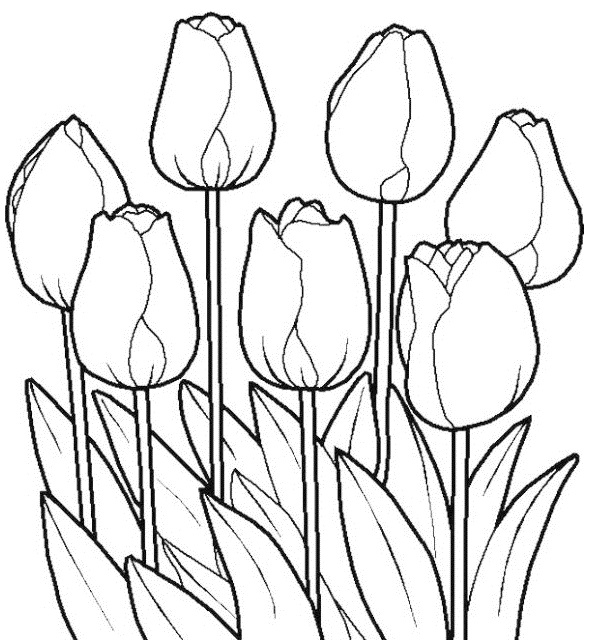 tulip flower coloring pages tulips flowers coloring pages and tulips crafts spring coloring flower tulip pages