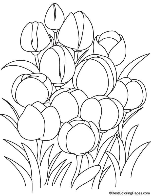 tulip flower coloring pages tulips for flower bouquet coloring page color luna flower tulip coloring pages