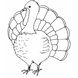 turkey color pages coloring pages turkey coloring pages free and printable color pages turkey