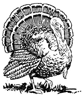 turkey color pages happy thanksgiving coloring pages to download and print color pages turkey