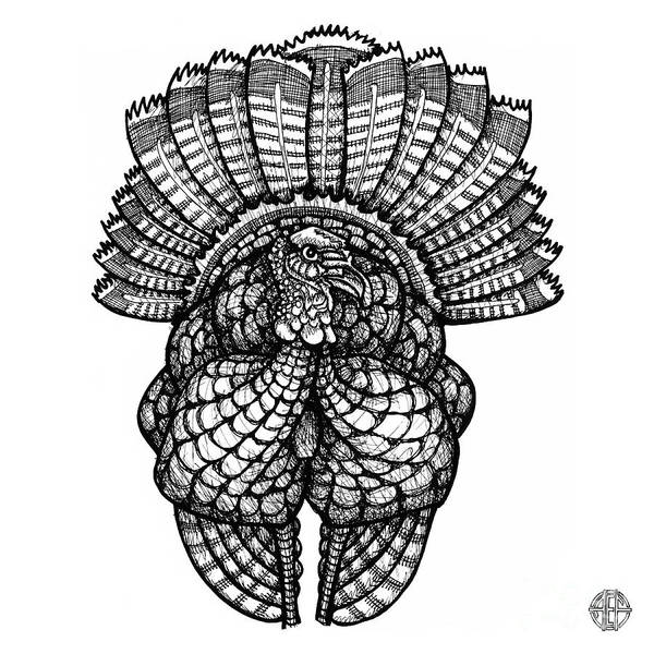 turkey drawing animals on behance turkey drawing