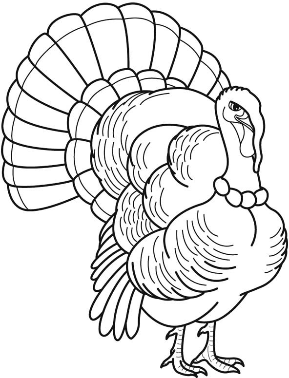 turkey drawing line drawing of a turkey at getdrawings free download turkey drawing