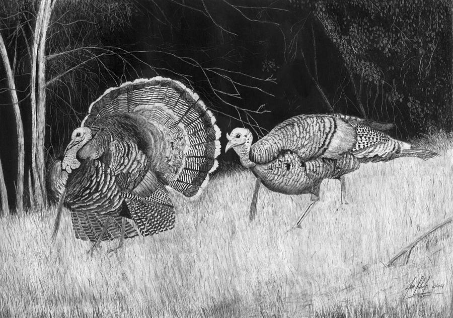 turkey drawing wild turkey drawings fine art america turkey drawing