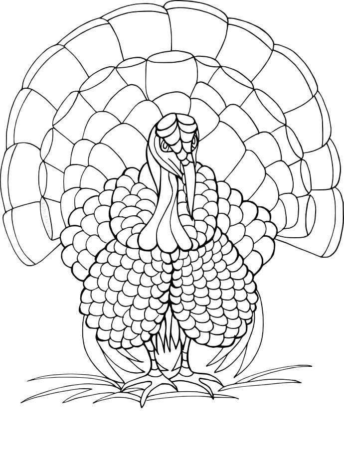 turkeys to color cute printable thanksgiving coloring pages at getdrawings to turkeys color