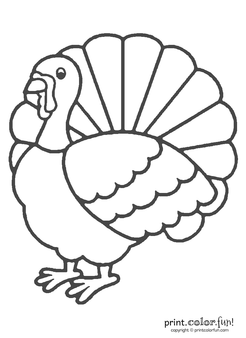 turkeys to color turkey bird coloring pages at getcoloringscom free turkeys color to