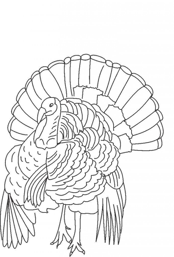 turkeys to color turkey drawing to color at getdrawings free download color to turkeys