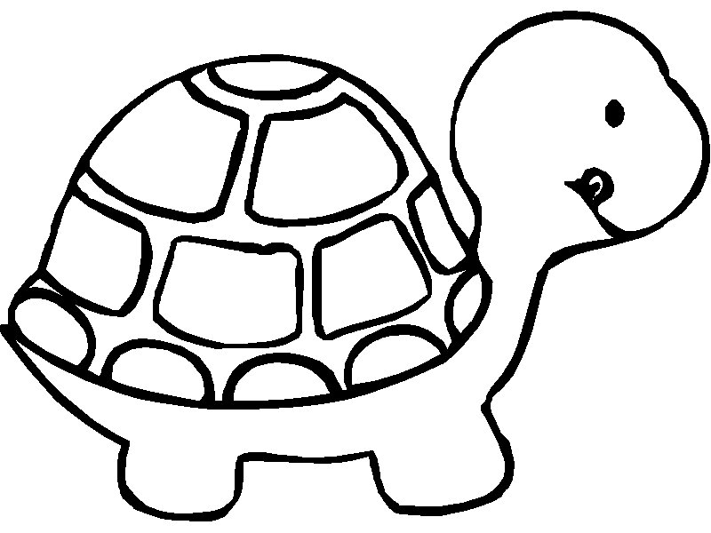 turtle coloring images free printable animal quot turtle quot coloring pages images coloring turtle