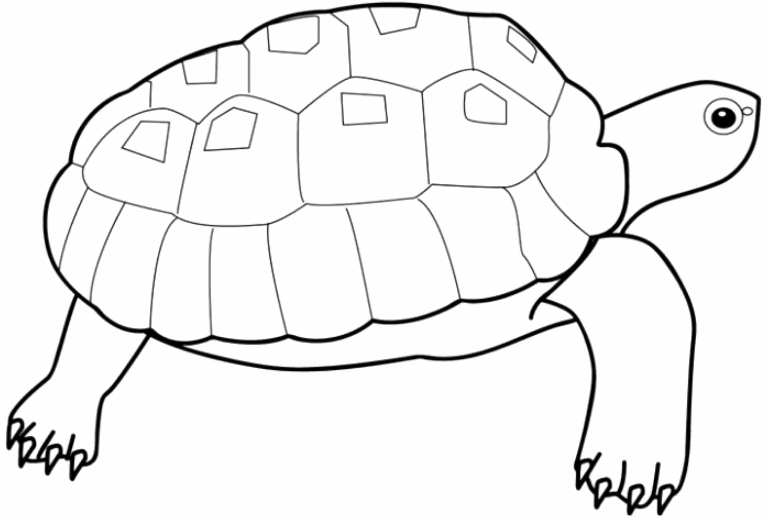 turtle coloring images print download turtle coloring pages as the turtle coloring images