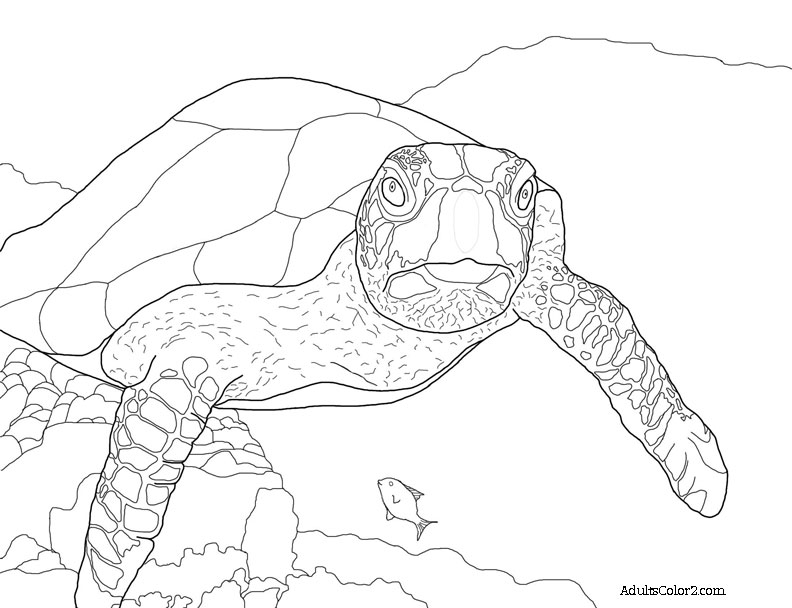 turtle coloring images sea turtle coloring page help hawksbills turtle images coloring