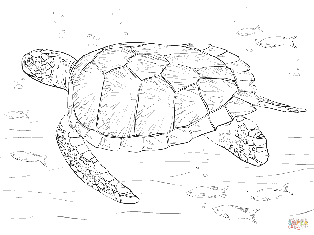 turtle coloring images sea turtle coloring pages kidsuki images turtle coloring