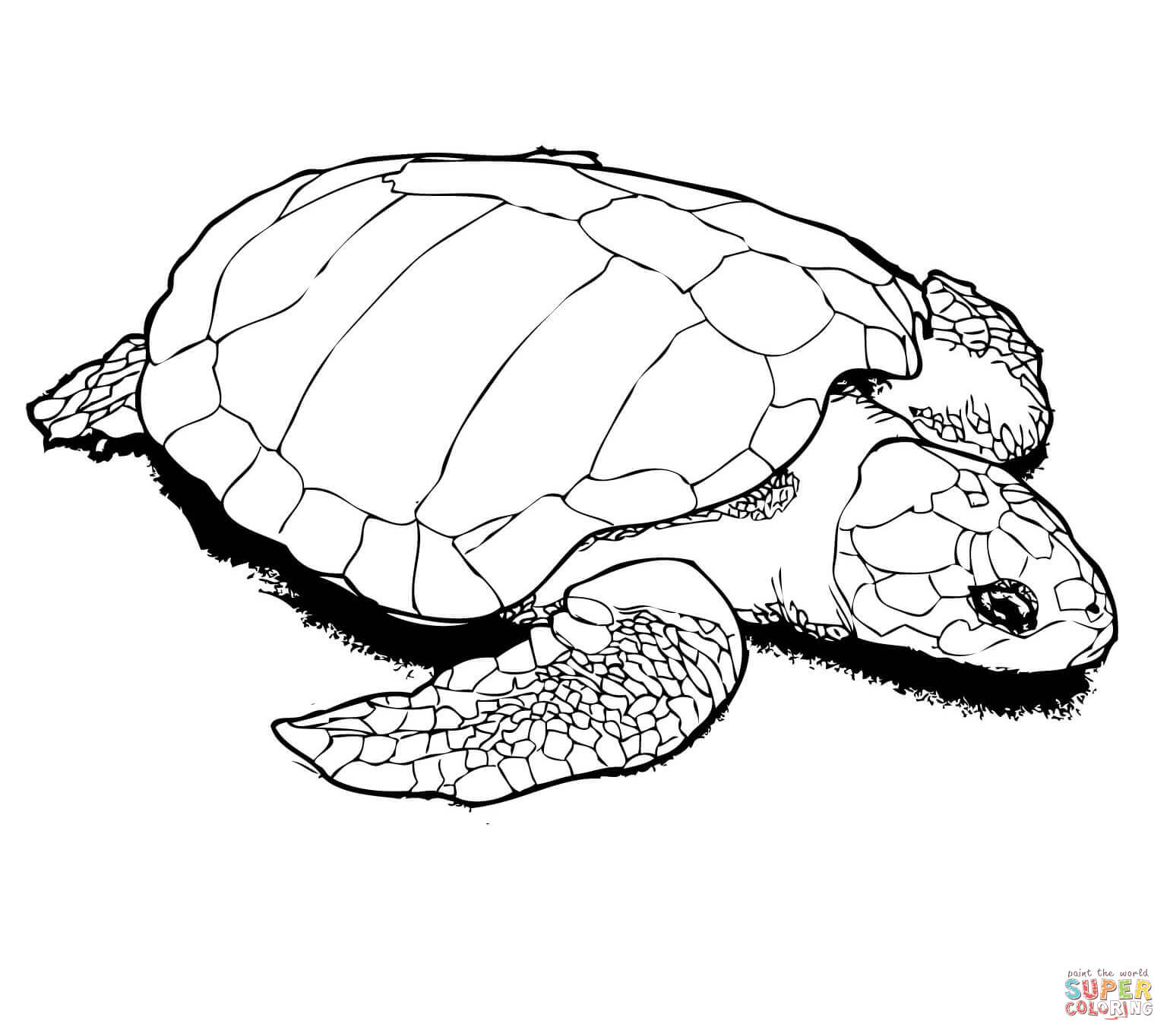 turtle coloring images snapping turtle coloring pages at getcoloringscom free images turtle coloring
