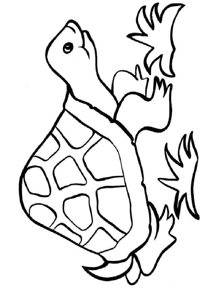 turtle coloring images turtles coloring pages download and print turtles images coloring turtle
