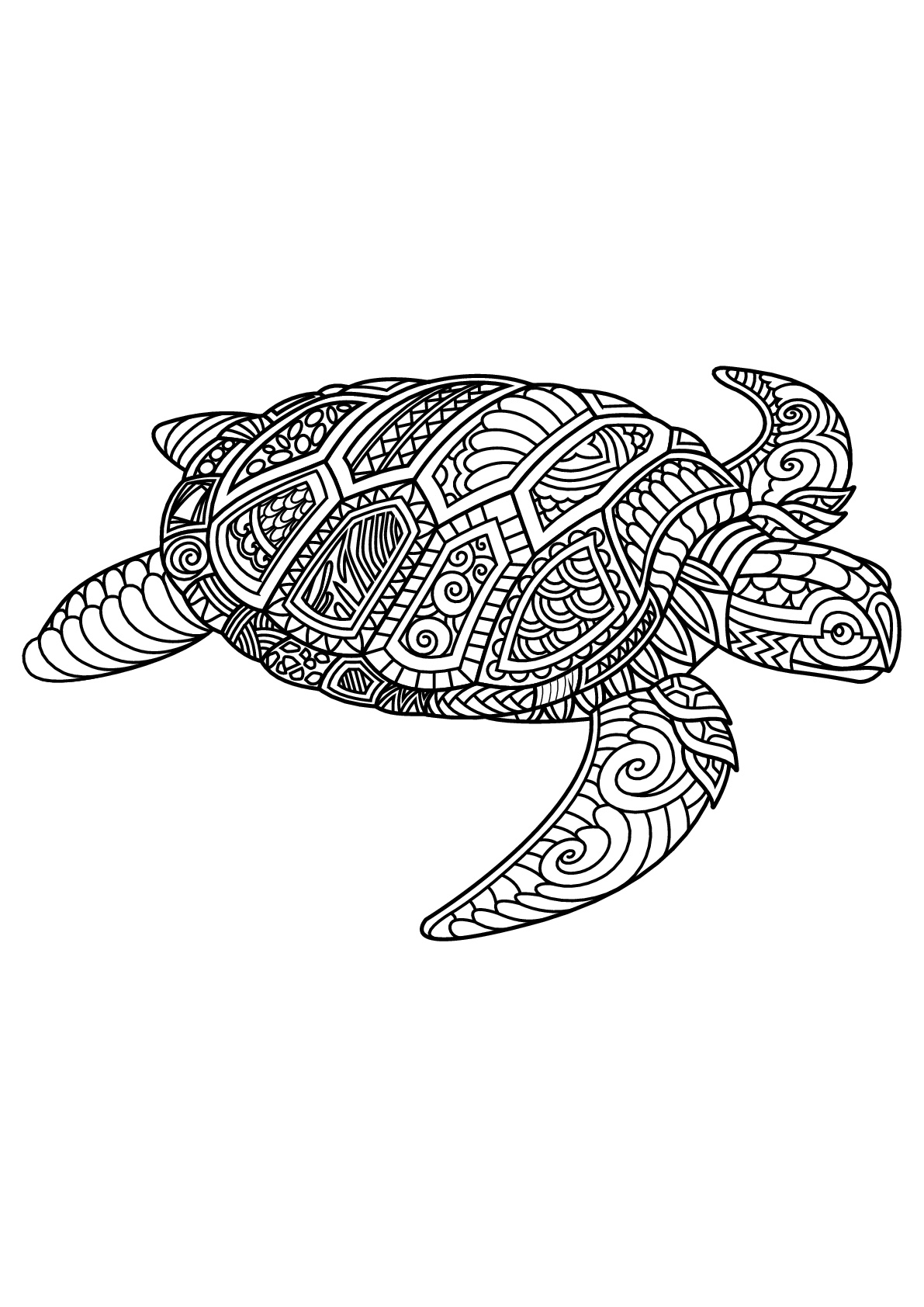 turtle coloring pages for adults adult coloring pages turtle at getdrawings free download turtle adults for pages coloring