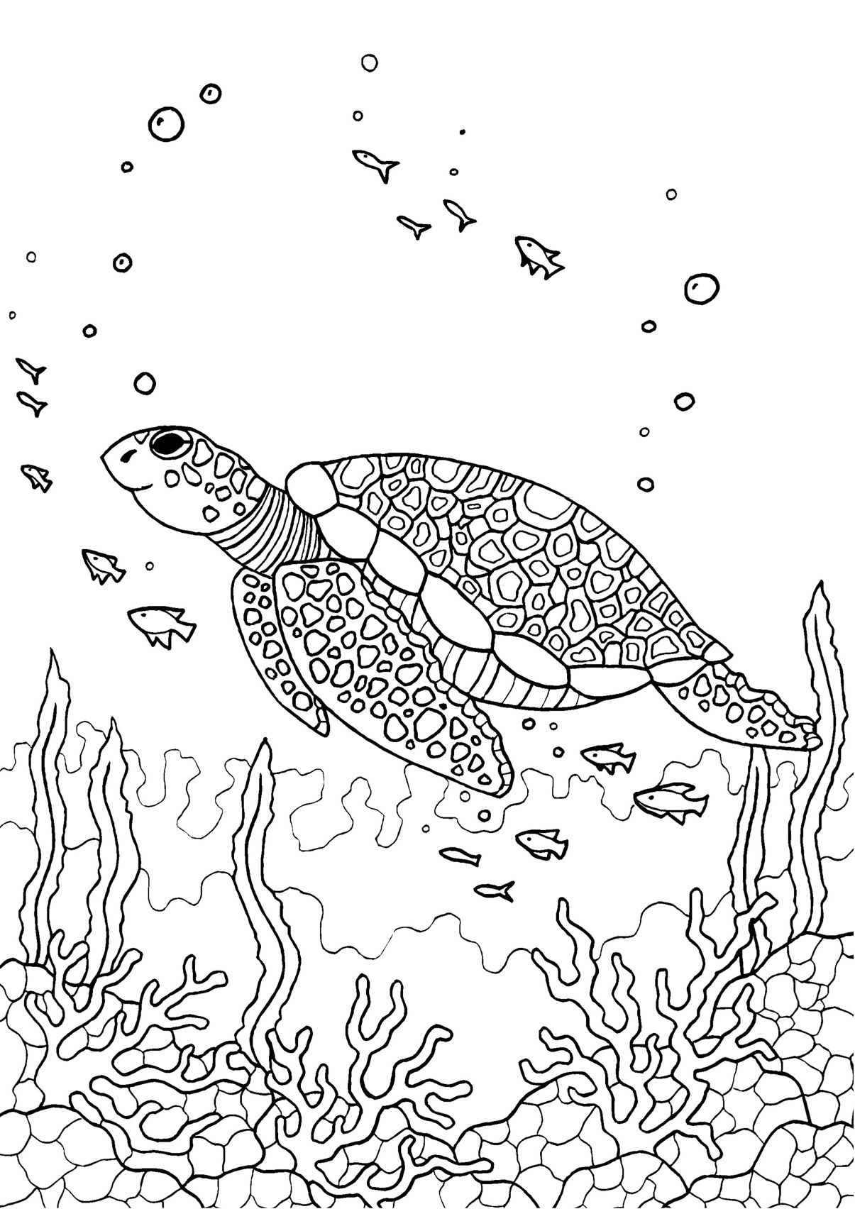 turtle coloring pages for adults free turtle coloring pages for adults printable to for adults pages turtle coloring