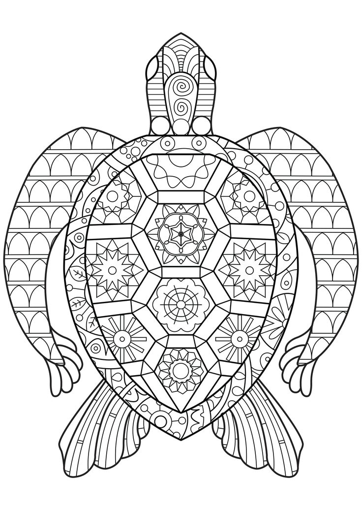 turtle coloring pages for adults free turtle coloring pages for adults printable to for coloring pages turtle adults