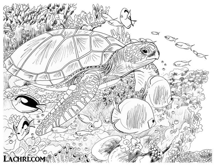 turtle coloring pages for adults hand drawn sea turtle for adult coloring pages stock turtle coloring adults pages for